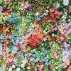 beautflowers